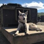 Besuch bei den Huskies, Copyright: insidenorway